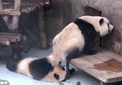 熊猫便便被制作成纸巾售卖,并且价格不菲,你们愿意用这种纸巾吗