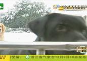 两只狗寄养一年多,欠下宠物店十多万?狗主人说资金出问题