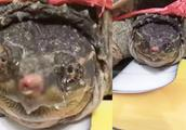 男子养了5年的乌龟,突然下蛋了,他把蛋吃了,却发生了这一幕