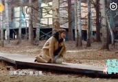 杨紫穿高跟鞋摔倒,回答超爆笑!说好的偶像包袱?
