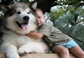 """养犬!千万不要养""""阿拉斯加犬""""!有一点让人无法忍受,看着心烦"""