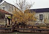 去苏州园林别忘了去逛历史街区,平江路是曾经走过的最温暖的路
