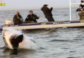 莫塞尔湾,游客随时都有可能碰上大白鲨,但伤人事件却十分少