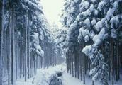 男子逃票被困雪山,怎么回事背后具体原因是为何?