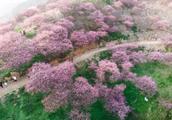 江浙沪两条小众赏花线路,家门口就有不输婺源、九寨沟的春光!