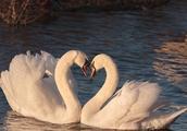 什么是最好的爱情?