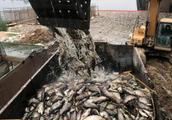 伊拉克突出现大量死鲤鱼 水污染加剧可能是祸首