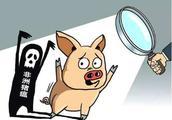 江西首例非洲猪瘟是什么情况?这些关于非洲猪瘟的消息都是谣言