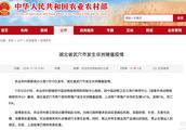 湖北省武穴市发生非洲猪瘟疫情