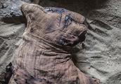 考古学家在埃及发现新墓地 几十只木乃伊猫被挖掘出土