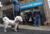 杭州治理违规养犬 已经查处1507件违规行为