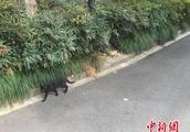 杭州民政公布8家合法动物保护类社会组织名单
