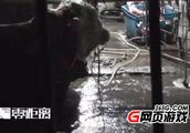 安徽一屠宰点黄牛12小时注水120斤 注水牛肉有哪些危害如何监管