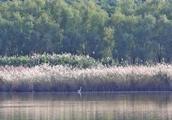 114万亩!河南将新建18个湿地公园,看看涉及哪些地市?