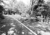 大树挡路引发事故致女子死亡 安徽两被告共赔偿11万余元