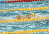 世游赛|孙杨确定参加自由泳接力 门票一下子被炒高了