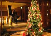 沙特宣布:严禁圣诞树的进口