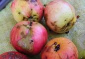 局部腐烂的苹果会致癌?冬季这些水果适合热着吃