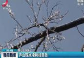 庐山现冰凌树挂美景