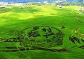 济宁21个项目入选首批省级乡村振兴重大项目库!涉及任城、泗水、兖州……