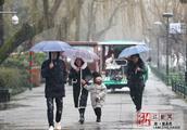 一周降雨后杭州再度飘雪 西湖雪景看不厌