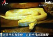 重庆:女孩网购黄金蟒 家长吓得赶紧报警