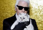 """""""老佛爷""""走了,他的爱猫将继承巨额遗产?这只喵星人的生活""""秒杀""""王思聪的狗"""