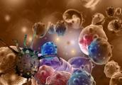 大蒜秋葵并不抗癌,真正的抗癌的是他们,很多人都被误导了