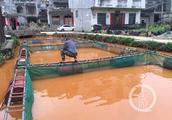 广西一大型铝业公司排泥库泄漏,河水泛黄网箱鱼死亡