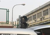 """东营:学生出行""""车来车往"""" 交通信号灯集体""""罢工"""""""
