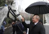 又双叒叕收到狗!普京访吉尔吉斯斯坦获赠猎犬和马