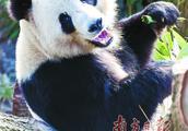 丹麦女王剪彩欢迎中国大熊猫
