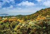 """四月的南澳岛开满相思花 一起来参加""""醉美海泉湾""""摄影大赛吧"""