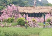 朴素的世外桃源,朴实的黄姚古镇,让人在欣赏美景的同时陶冶性情