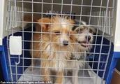 """杀死200多条狗腾地方 """"不杀生""""的动物保护组织受指控"""