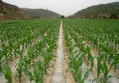 农民朋友们,这几个问题与你种玉米有关,也许能为你解开疑问