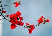 王安石最美的一首诗,短短二十八字,便惊艳了春天!