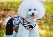 最受欢迎的五大宠物狗,哈士奇,萨摩耶上榜,你最喜欢哪一个?