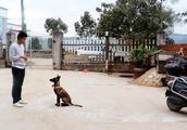 狗狗想吃肉,农村小伙直接炖4斤重的老母鸡给它吃,这狗太幸福了