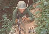 老山前线我军用老鼠就将越军搞得精神崩溃?这种生物兵器脑洞太大
