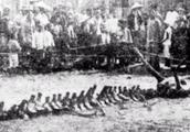 重大考古发现,龙真的存在,专家没有骗我们,8000年前就有龙出现