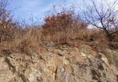 男子不慎跌下山崖,看见山崖下面有一个老婆婆和一群巨蟒