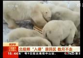 """北极熊""""入侵""""居民区,南北半球气温差100度,地球开启极端模式"""