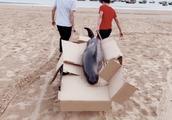 广东两青年花1500元买江豚放生 渔政部门:对销售者立案调查