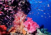 """""""祖国南海,美丽的西沙群岛"""",西沙群岛真的是由珊瑚形成的吗?"""