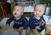 只够救一个!大连一岁双胞胎患白血病!父母撕心裂肺