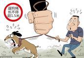 """多地禁中华田园犬引发""""土洋之辩"""",质疑之前不妨多些理性"""