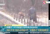 9个月收到1万多件养犬纠纷投诉——上海正开发犬类办证防疫APP!