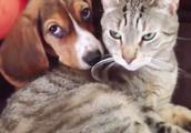 狗狗找了猫咪当靠山,都不把主人放眼里了,撸都不让撸