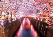 """去日本旅游与批判""""精日""""行为,真的就是爱国与不爱国之分吗?"""